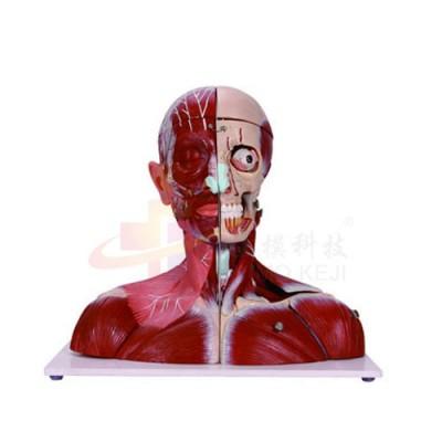 医模 头颈模型