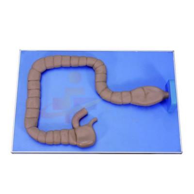 医模 乙状结肠镜操作模型