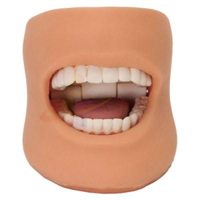 医模 正常大小口腔护理操作模型(带脸颊)