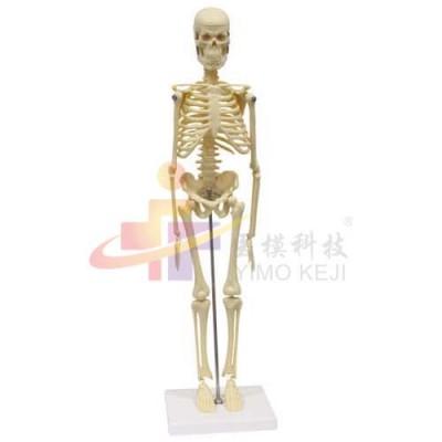 医模 人体骨骼模型(45cm)
