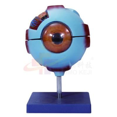 医模 放大眼球示教模型