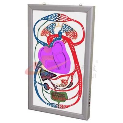 医模 电动心脏搏动与血液循环电动模型
