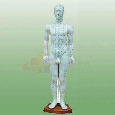 医模 人体针灸穴位模型