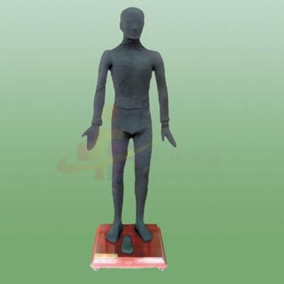 医模 多媒体按摩点穴电子人体模型
