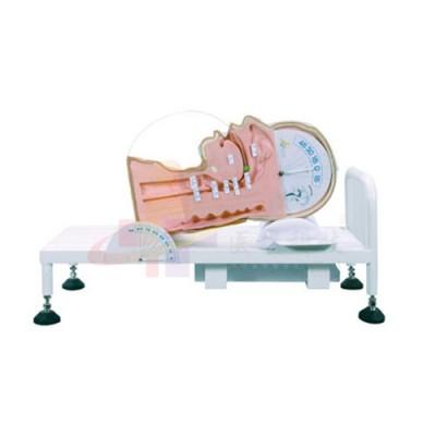 医模 吞咽与呼吸机制演示模型