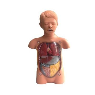 嘉奕 JY/H-2032 儿童透明洗胃训练模型