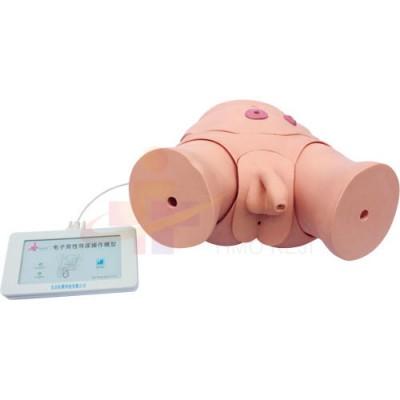 医模 电子导尿灌肠操作模型