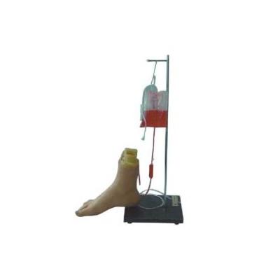 嘉奕 JY/H-1026 下肢足部静脉注射仿真模型