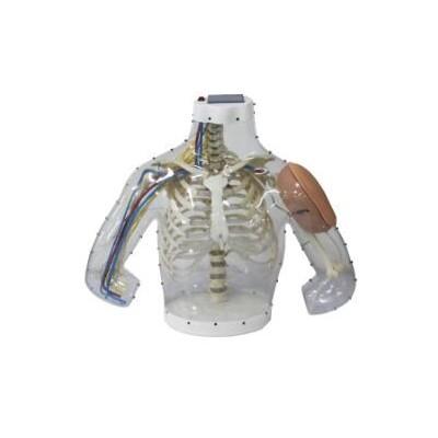 嘉奕 JY/H-1014 上臂肌肉注射及对比模型(带检测警示系统)