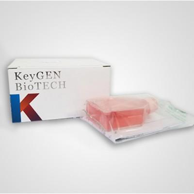 凯基SW480 人结肠癌细胞 人结肠癌细胞系说明书