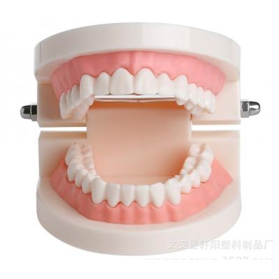 小牙模 轩阳口腔模型 幼儿园刷牙教学模型
